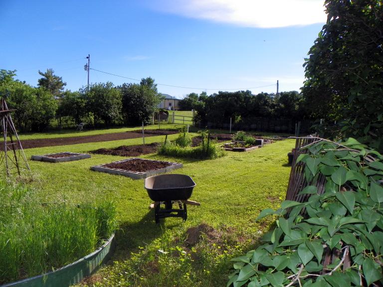 06-21-14 Garden 04.jpg