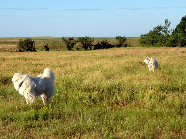 07-28-14 White woofs 02.jpg