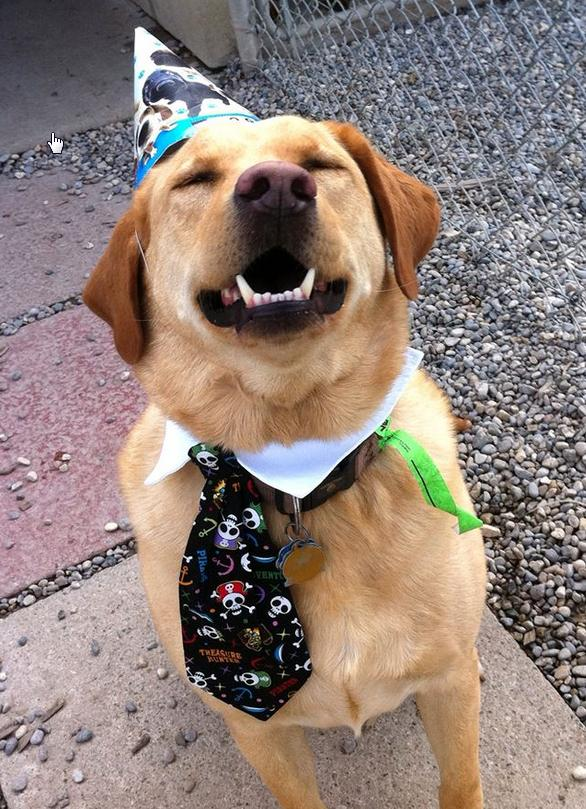 7j8n1-birthday-dog.jpg