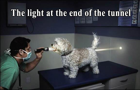 Funny-photo-with-caption-dog-the-light-at-the-end-of-the-tunnel.jpg