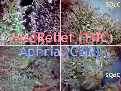 MedRelief (THC-centric) vs Aphria (Full-CBD) [400x300] .PNG