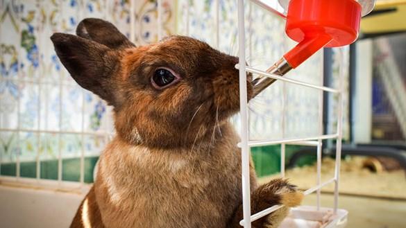 rabbit-drinking-2.jpg