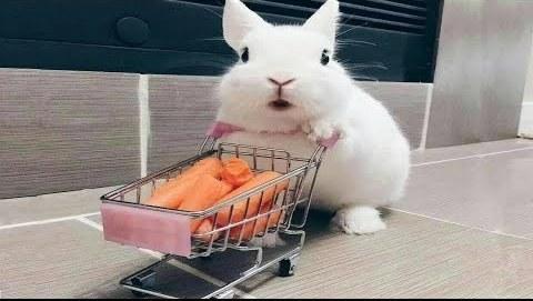 shoppingbunny.jpg