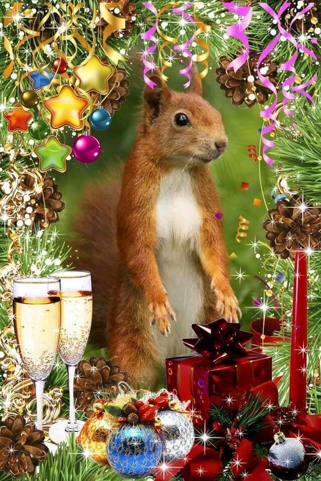 squirrelXMAS.jpg