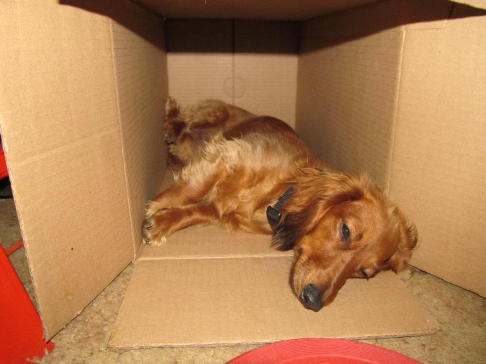 Trixie box.jpg