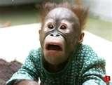 WTF Monkey Template.jpg