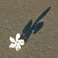 SpiritShadow