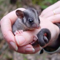 Possum64